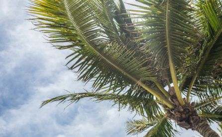 On-Demand Webinar: Should I Stay or Should I Go? Relocating Your Business to Florida